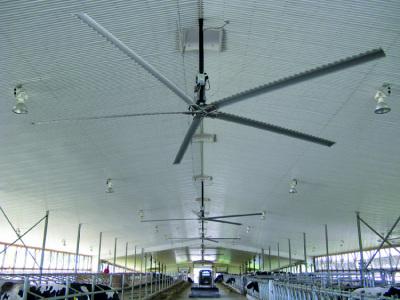 Rotor: Deckenventilator nach Walflossenprinzip