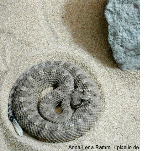 Die Klapperschlange als Symbol der Schamanen für Transformation