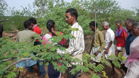 Heil und Heilung bei den ureinwohnern Indiens