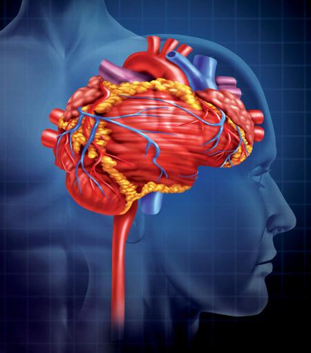 Ph. D. Rollin McCraty - Das HerzGehirn