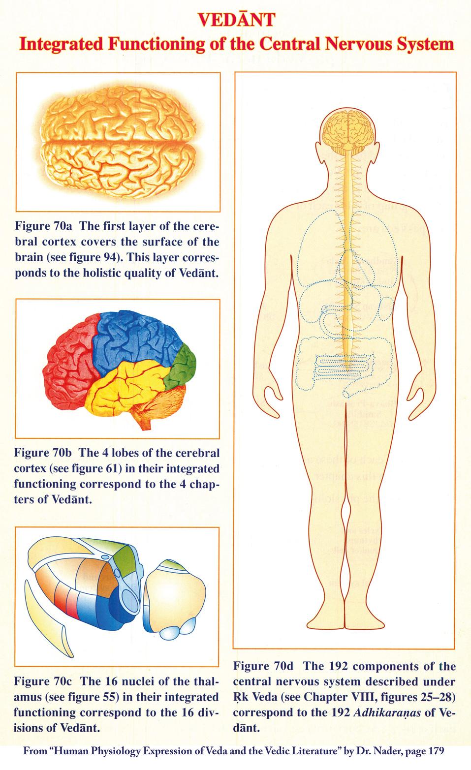 Die Funktionen des zentralen Nervensystems