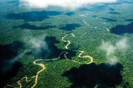 Der Amazonas, ein Meer aus Bäumen