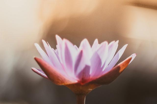 Meditation und Spiritualität aus Sicht des Ayurveda
