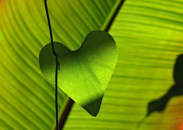Die Intelligenz des Herzens