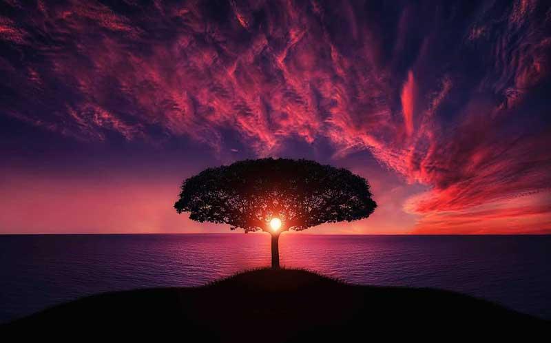 Teilhard de Chardin: Bewusstseinspionier für eine Religion und eine Wissenschaft der Liebe