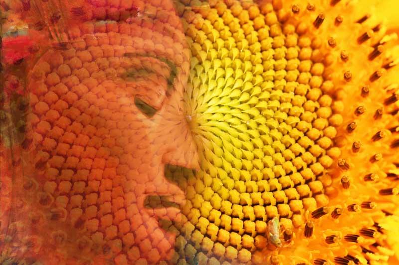 Risiken und Nebenwirkungen des Erwachens