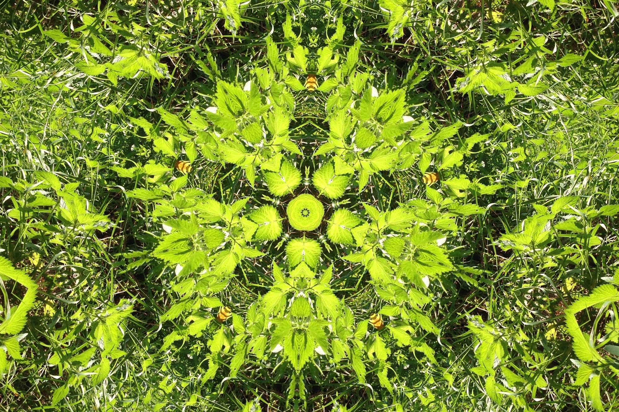 Spirituelle Pflanzenheilkunde