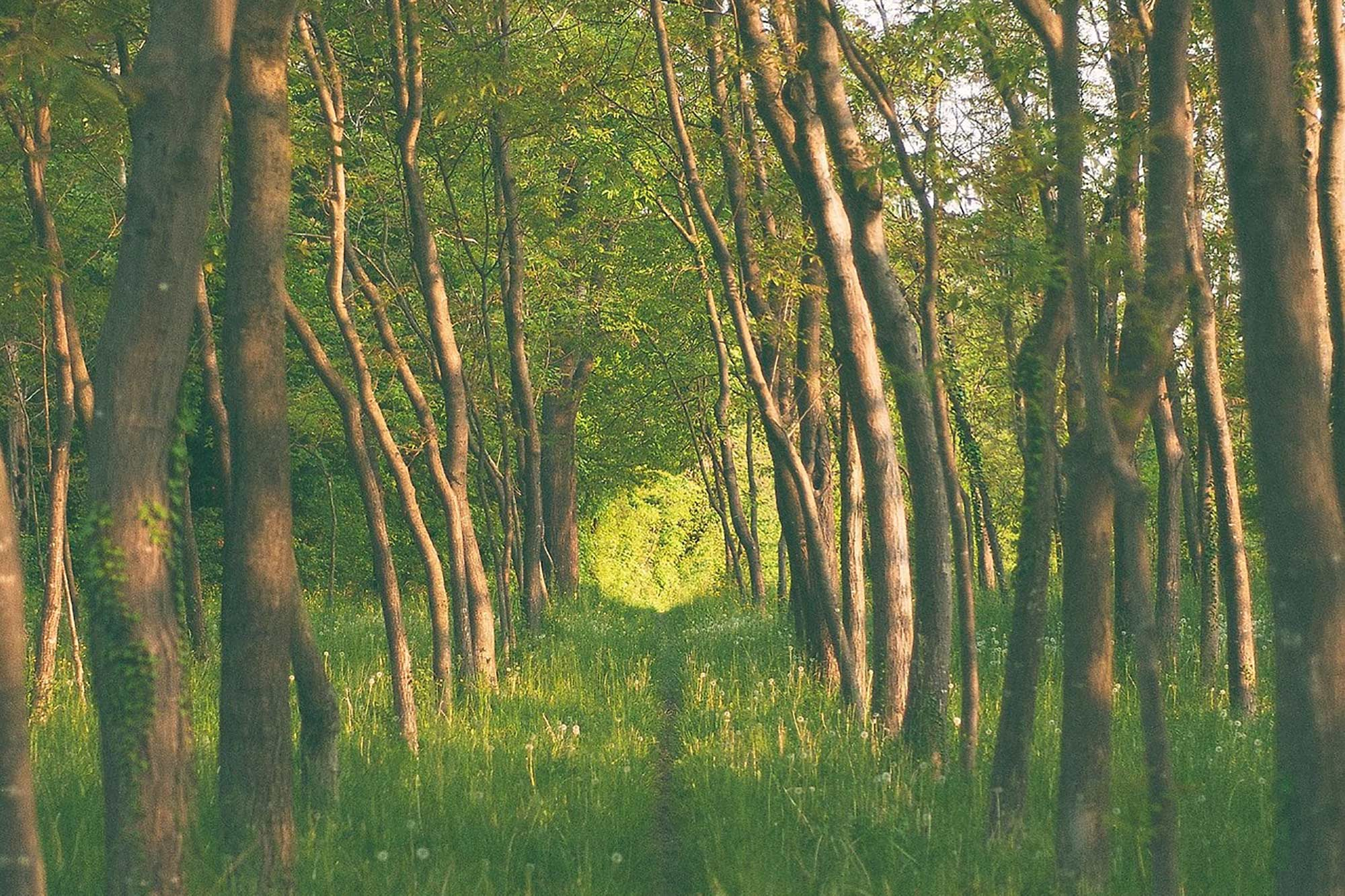 Die Natur in uns
