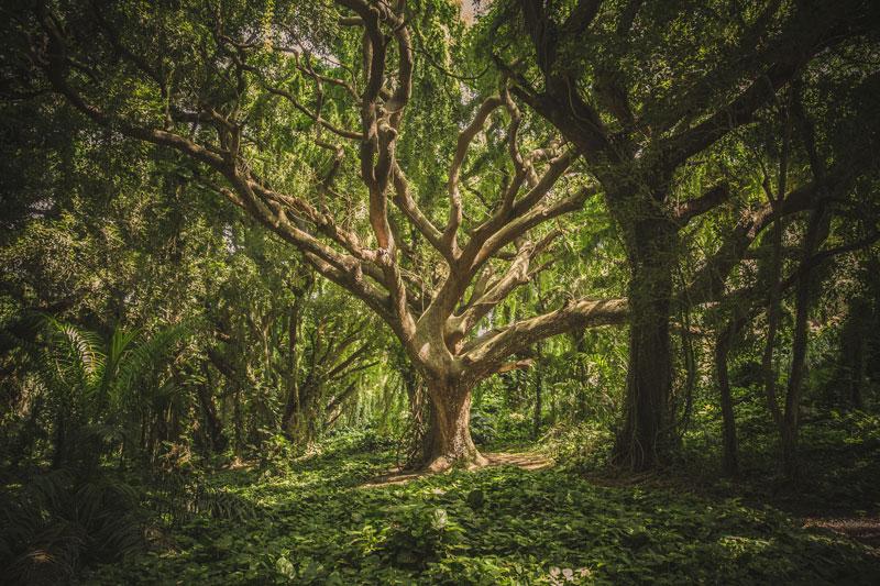 Über die tiefgründige Bedeutung von Heilung im Ayurveda